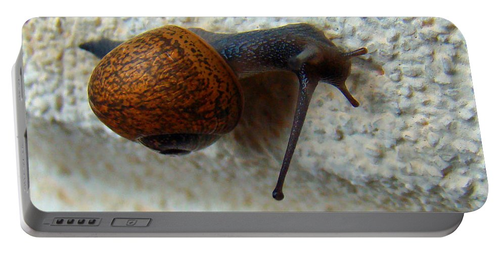Garden Snail Portable Battery Charger featuring the photograph Wall Snail 1 by Nancy L Marshall