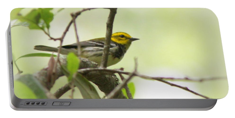 Black-throated Green Warbler Portable Battery Charger featuring the photograph Warbler - Black-throated Green by Travis Truelove