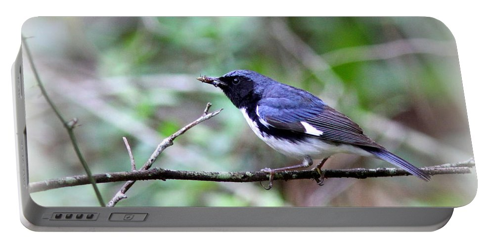 Black-throated Blue Warbler Portable Battery Charger featuring the photograph Warbler With Lunch by Travis Truelove