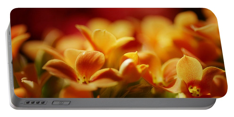 Flowers Portable Battery Charger featuring the photograph Warm Spring Glow by Susan Capuano