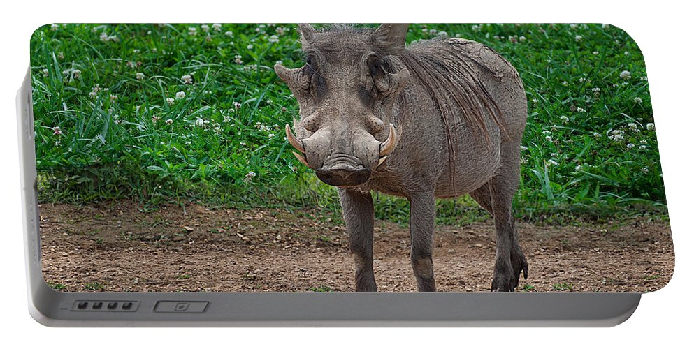 Warthog Portable Battery Charger featuring the photograph Warthog Stance by Photos By Cassandra