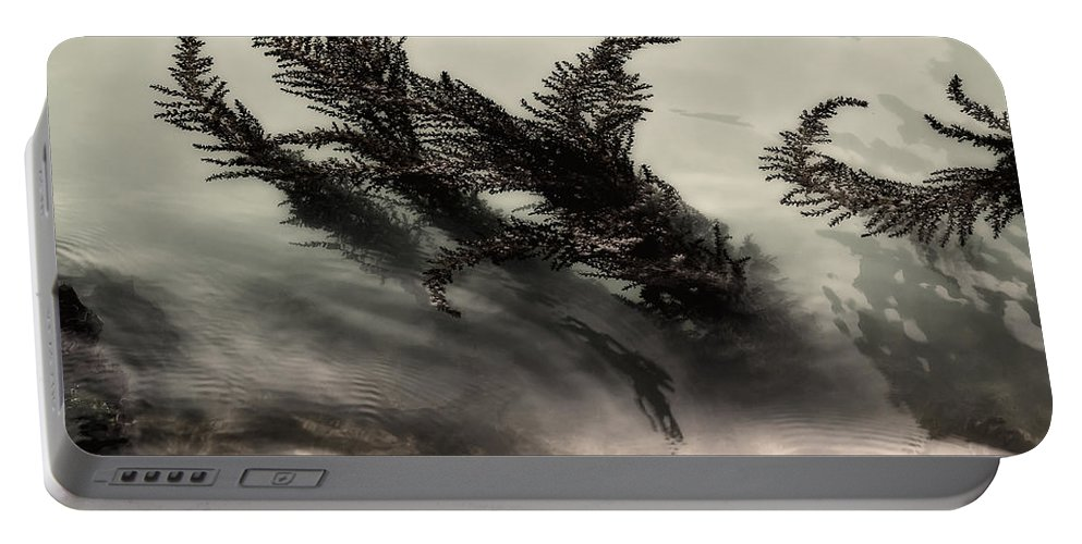 Water Fronds Portable Battery Charger featuring the photograph Water Fronds by Dave Bowman