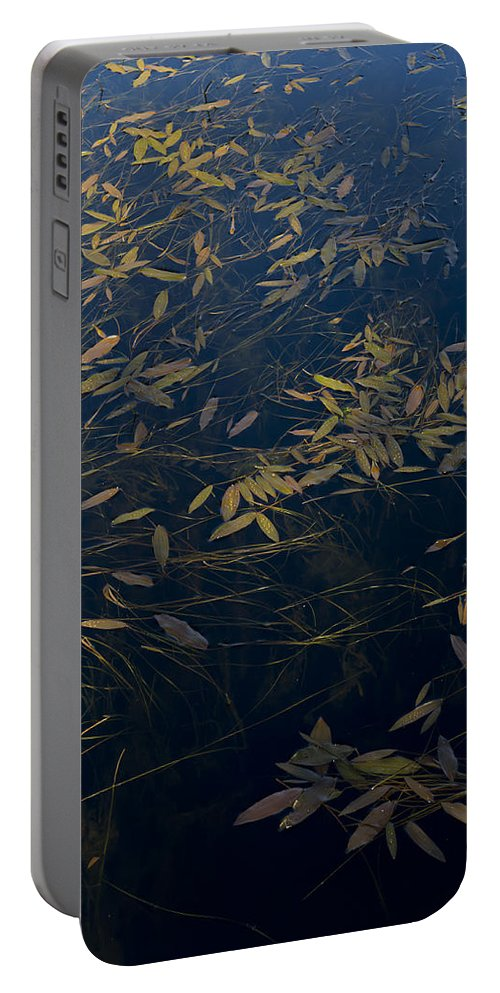 Leaves Portable Battery Charger featuring the photograph Water Leaves by Gary Eason