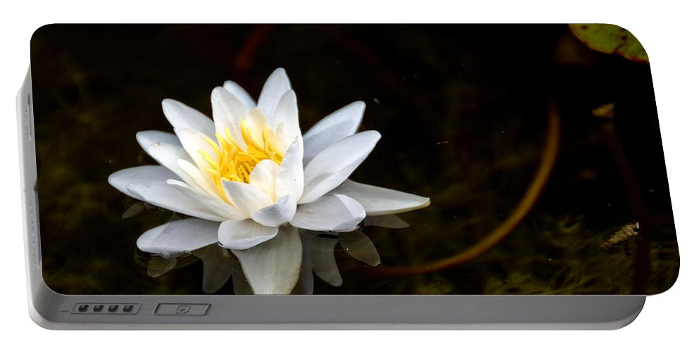 Lily Portable Battery Charger featuring the photograph Water Lily by Cheryl Baxter