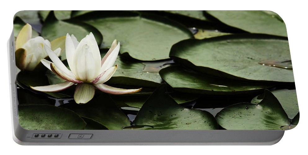 White Water Lily Pad Portable Battery Charger featuring the photograph Water Lily Pad by Peter v Quenter