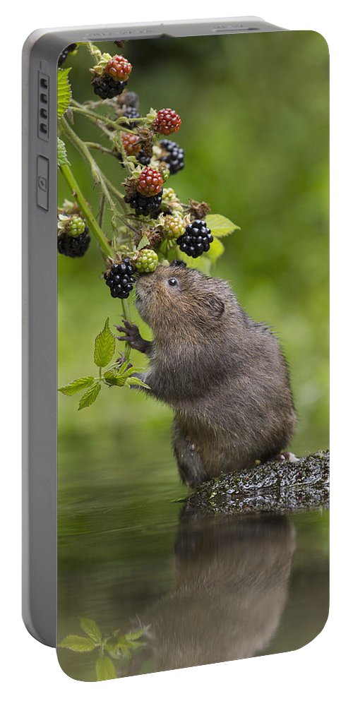 Nis Portable Battery Charger featuring the photograph Water Vole Eating Blackberries Kent Uk by Penny Dixie