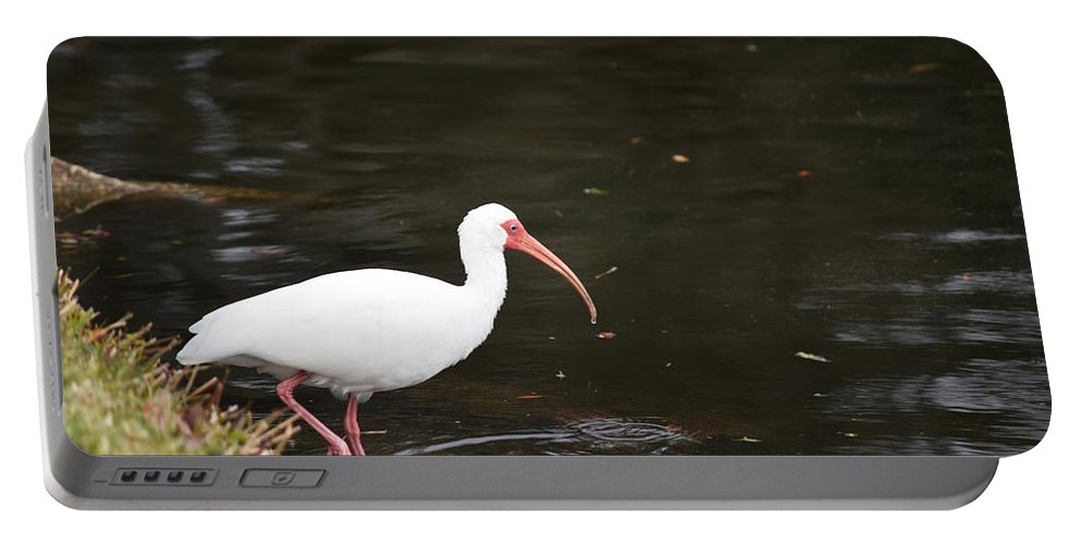Florida Portable Battery Charger featuring the photograph Water's Great by Linda Kerkau