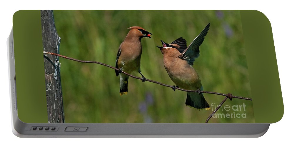 Festblues Portable Battery Charger featuring the photograph Waxwing Love.. by Nina Stavlund