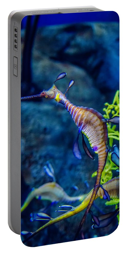 Dragon Portable Battery Charger featuring the photograph Weedy Seadragon by Alex Grichenko