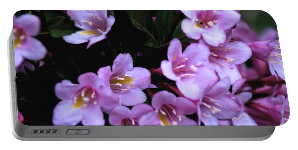 Weigela Portable Battery Charger featuring the photograph Weigela Blossoms by William Norton
