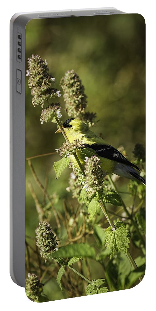 American Goldfinch Portable Battery Charger featuring the photograph Welcome To My Garden by Thomas Young