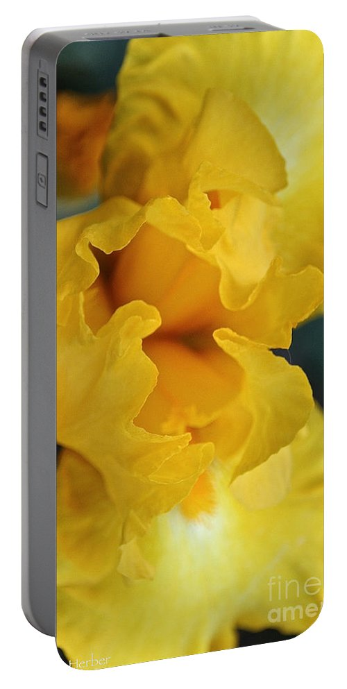 Flower Portable Battery Charger featuring the photograph Welcoming The Sun by Susan Herber