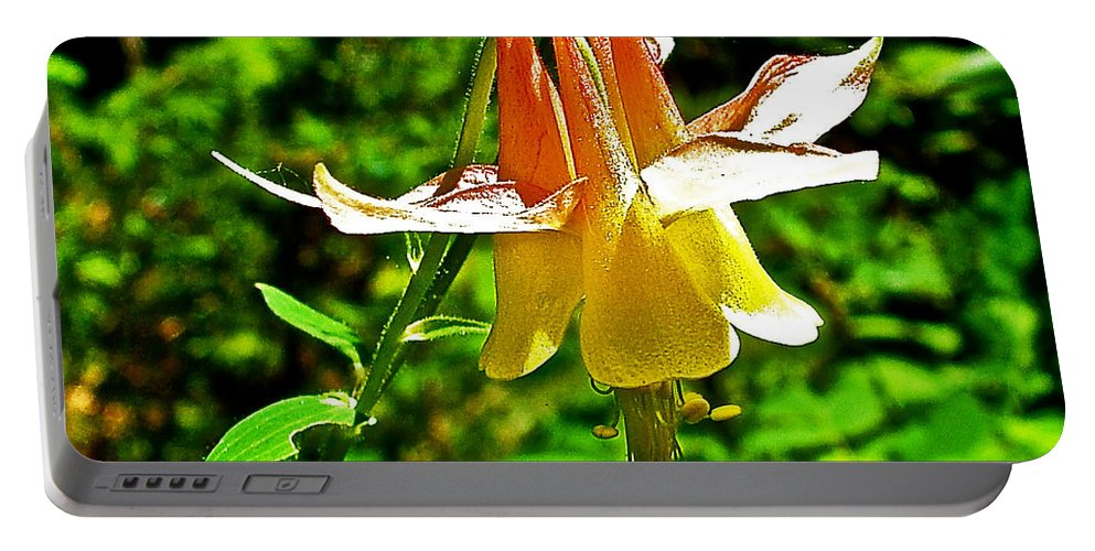 Western Columbine Along Wapta Falls Trail In Yoho National Park-british Columbia Portable Battery Charger featuring the photograph Western Columbine Along Wapta Falls Trail In Yoho National Park-british Columbia by Ruth Hager