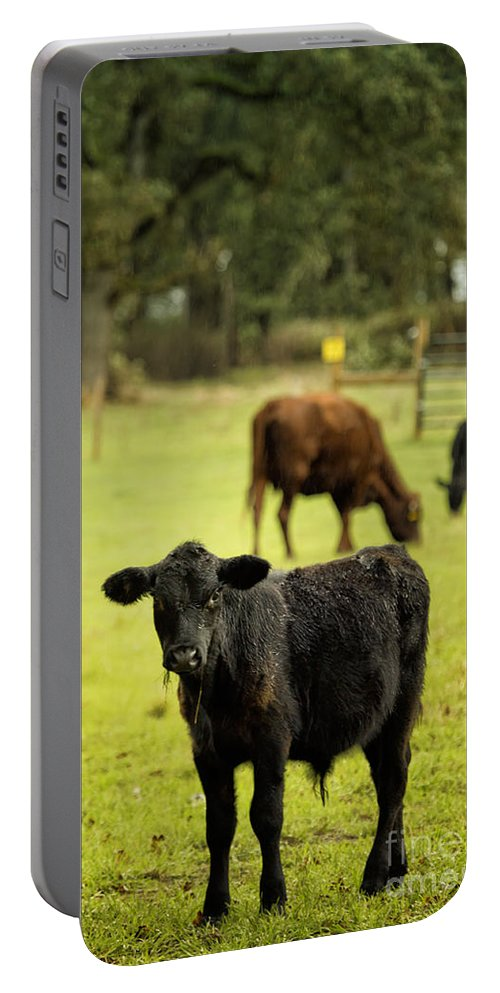Calf Portable Battery Charger featuring the photograph Wet Calf by Belinda Greb