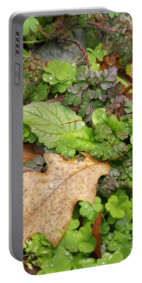 Leaves Portable Battery Charger featuring the photograph Wet Leaves by Belinda Greb