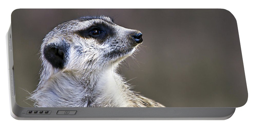 Meerkat Portable Battery Charger featuring the photograph What Did I Do Now by Ken Frischkorn