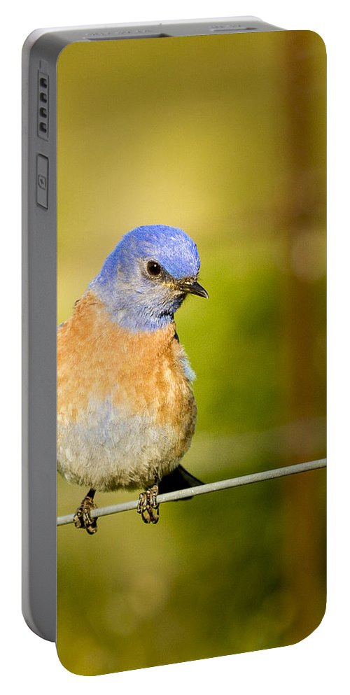 Bird Portable Battery Charger featuring the photograph Bird On A Wire by Jean Noren