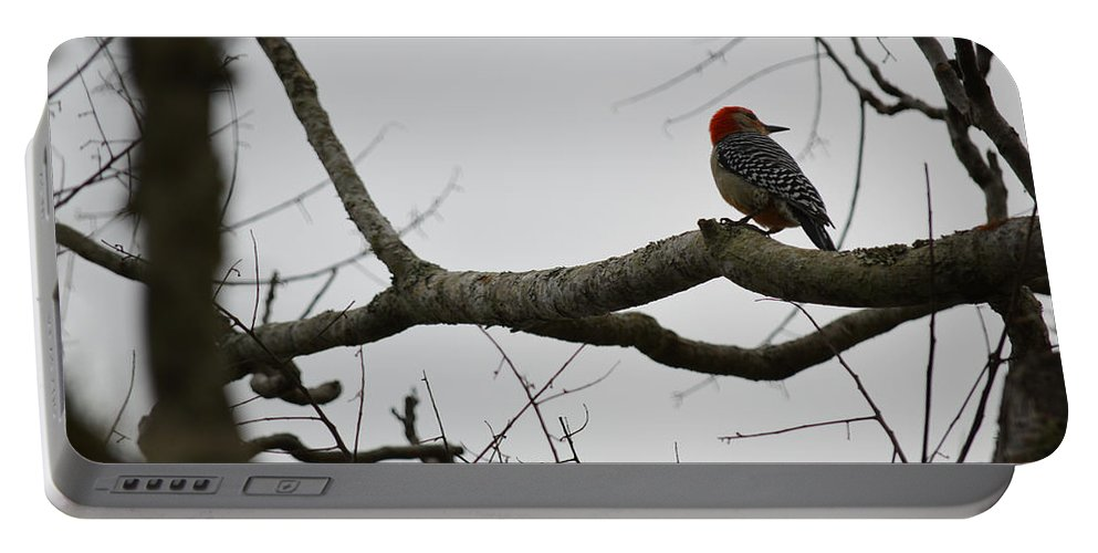 Woodpecker Portable Battery Charger featuring the photograph What's That? by Linda Kerkau