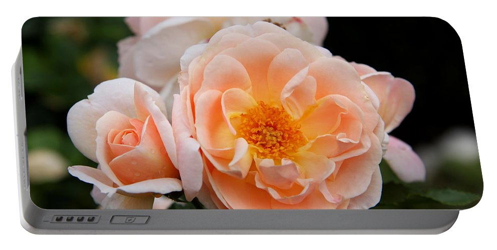 Rose Portable Battery Charger featuring the photograph Wheeping Rose by Christiane Schulze Art And Photography
