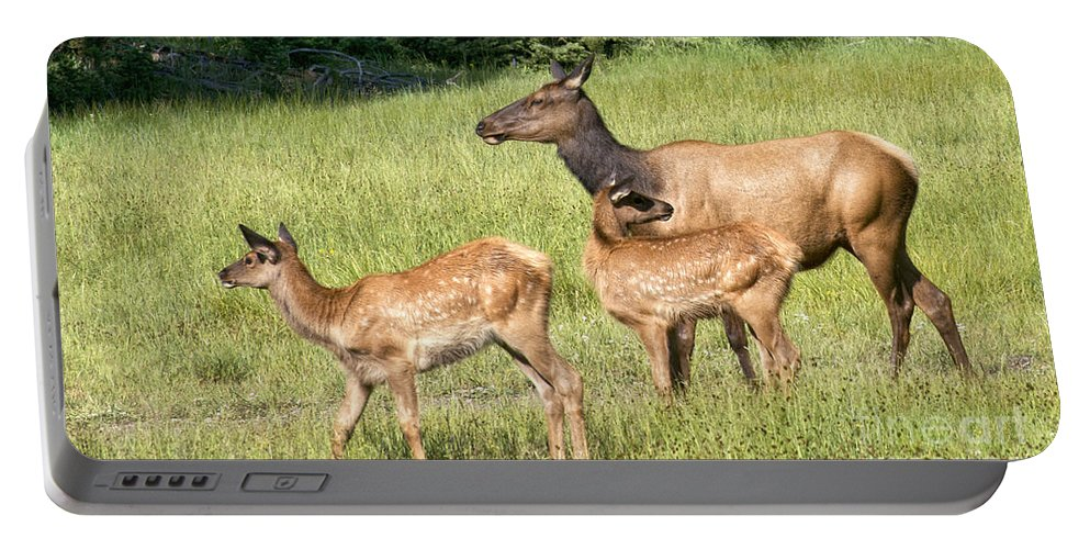 Elk Portable Battery Charger featuring the photograph Where Are We Going by Claudia Kuhn