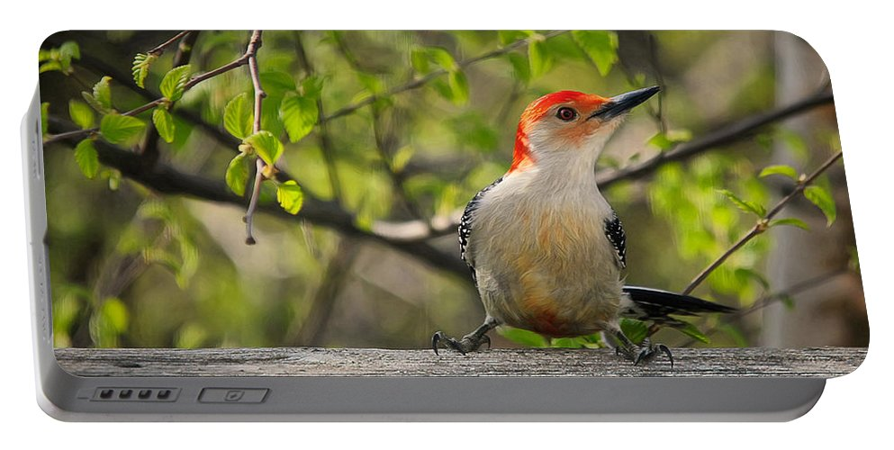 Woodpecker Portable Battery Charger featuring the photograph Which Way Did They Go by Lois Bryan