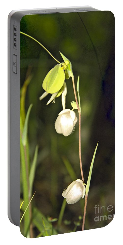 Wildflowers; Globes; Nature; Green; White Portable Battery Charger featuring the photograph Whispers by Kathy McClure