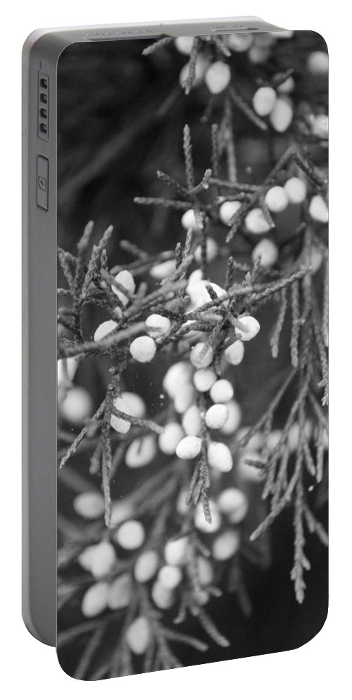Photography Portable Battery Charger featuring the photograph White Berries by Jackie Farnsworth