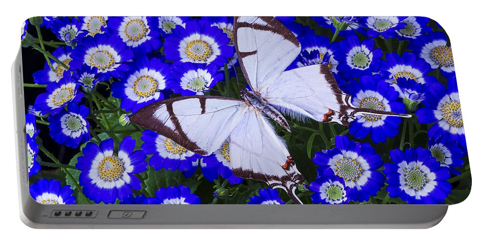 Blue Portable Battery Charger featuring the photograph White Butterfly On Blue Cineraria by Garry Gay