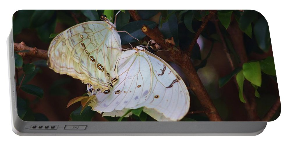 Moth Portable Battery Charger featuring the photograph White by Chuck Hicks