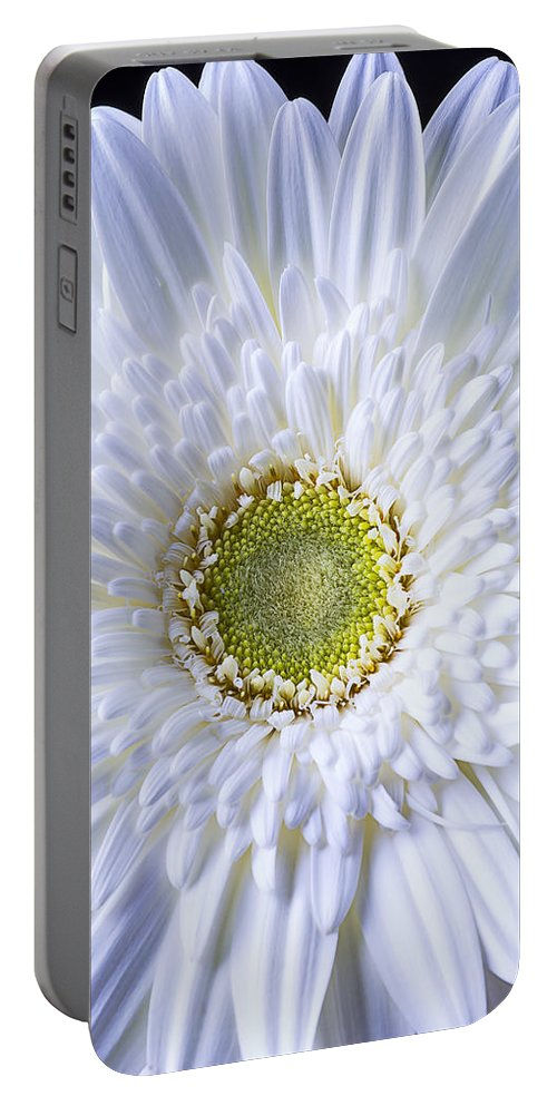 White Gerbera Daisy Portable Battery Charger featuring the photograph White Daisy Close Up by Garry Gay