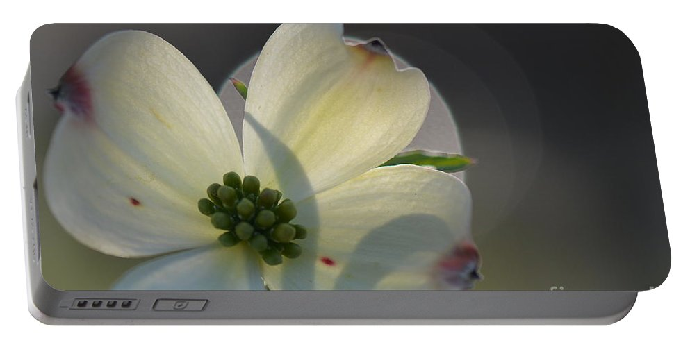 Honey Portable Battery Charger featuring the photograph White Dogwood Blooms Series Photo K by Barb Dalton