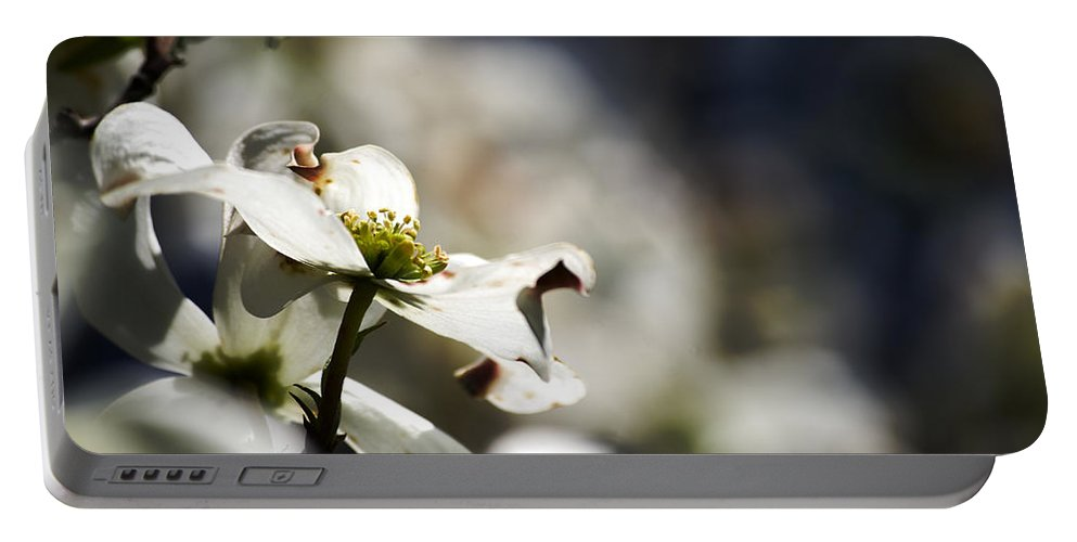 White Dogwood Flowers Portable Battery Charger featuring the photograph White Dogwood Flowers by Sharon Popek