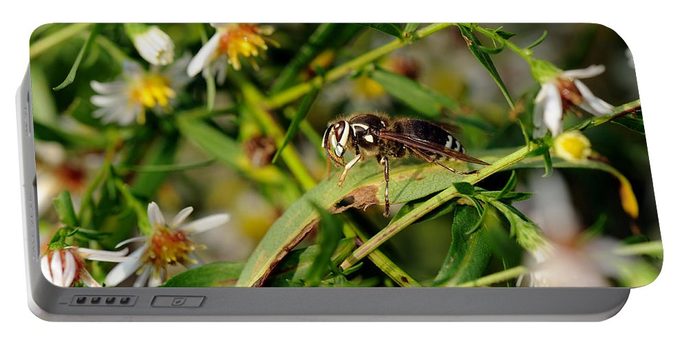 Bald-faced Hornet Portable Battery Charger featuring the photograph White Face by Ian Ashbaugh