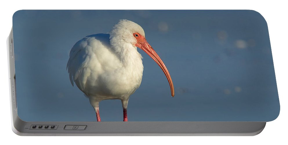 Bird Portable Battery Charger featuring the photograph White Ibis by Heather Pickard