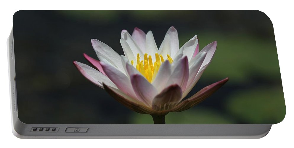 Flower Photographs Portable Battery Charger featuring the photograph White Lotus by Ramabhadran Thirupattur