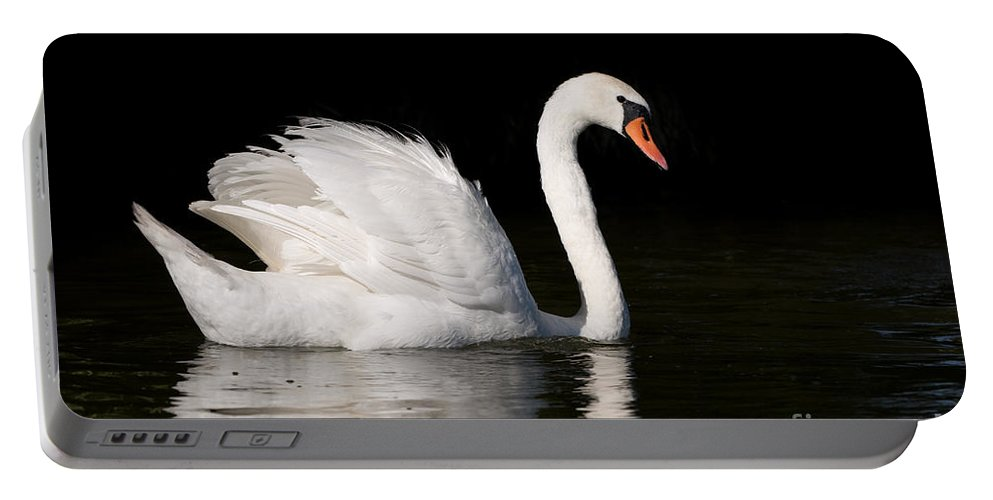 Alive Portable Battery Charger featuring the photograph Mute Swan Cygnus Olor At Lake In Ruciane Nida by Arletta Cwalina