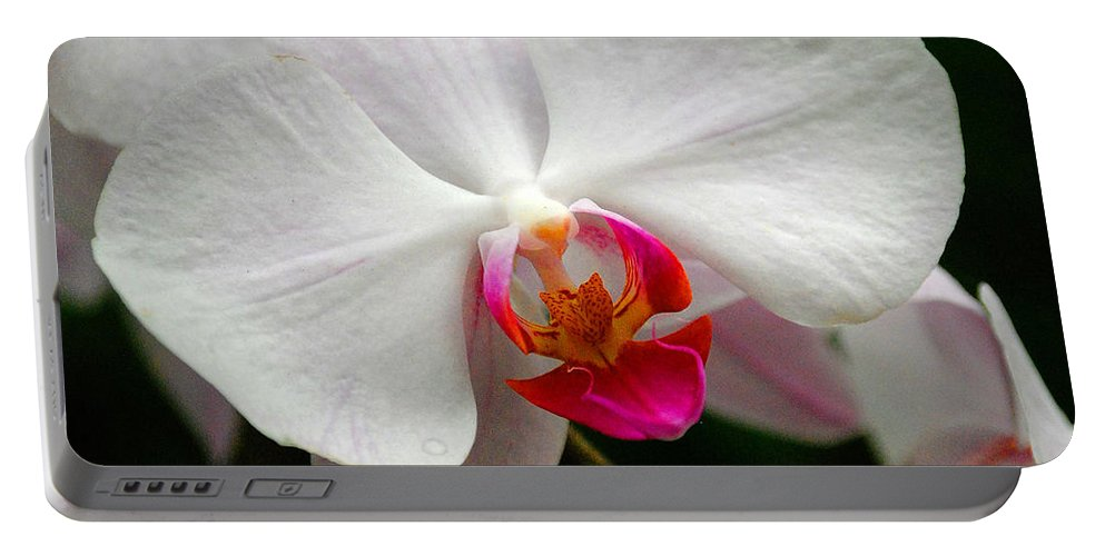 Orchid Portable Battery Charger featuring the photograph White Orchid by Rob Hawkins