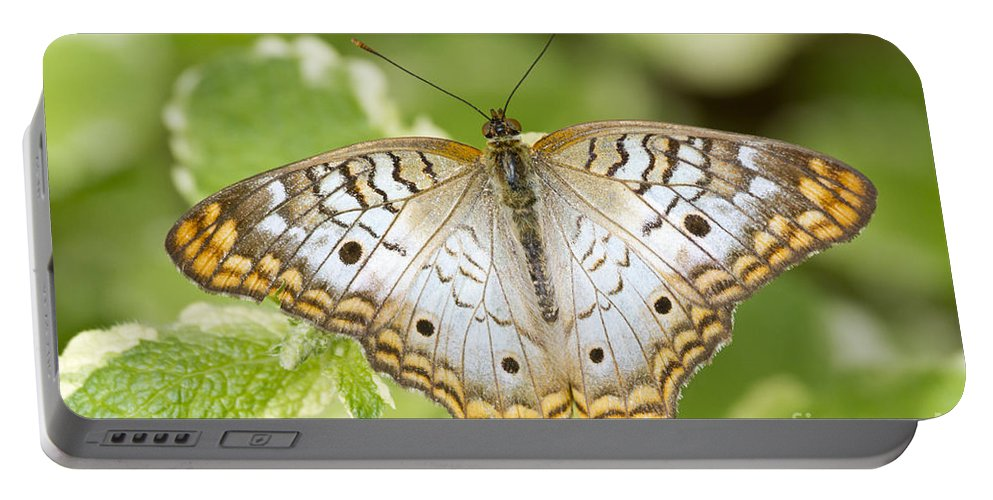White Peacock Portable Battery Charger featuring the photograph White Peacock by Bryan Keil