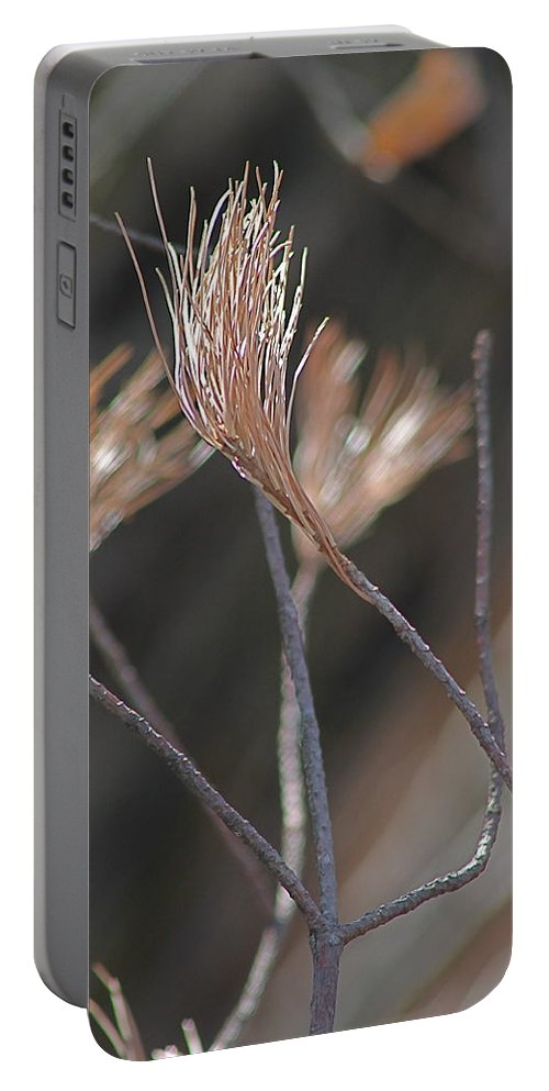 Pine Portable Battery Charger featuring the photograph White Pine Branch by Wayne Williams