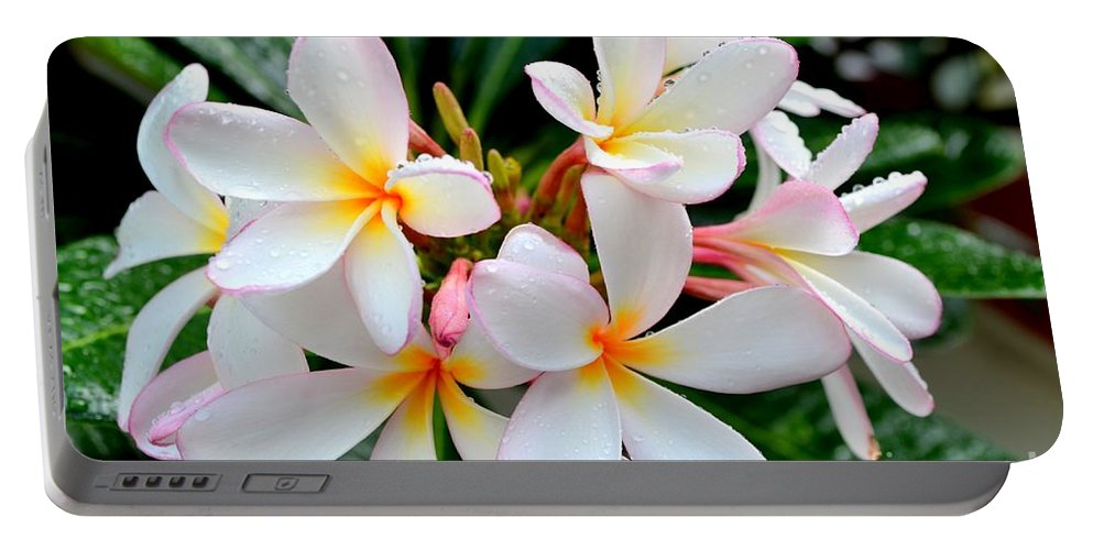 Plumeria Portable Battery Charger featuring the photograph White Plumeria - 1 by Mary Deal