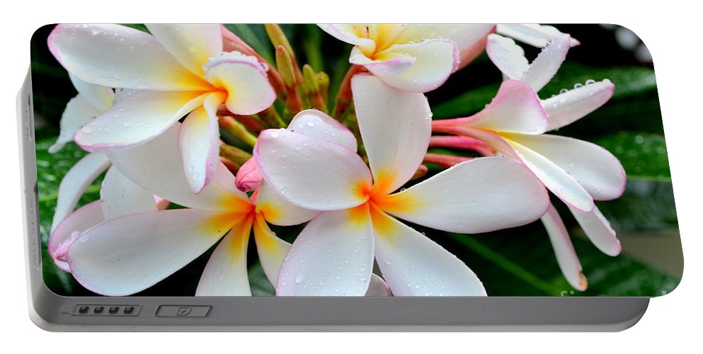 Plumeria Portable Battery Charger featuring the photograph White Plumeria - 2 by Mary Deal