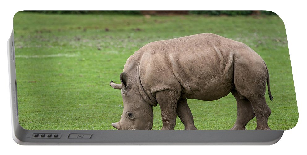 White Rhino Portable Battery Charger featuring the photograph White Rhino 12 by Arterra Picture Library