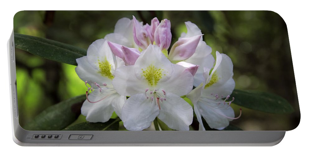 Flower Portable Battery Charger featuring the photograph White Rhododendren by David Freuthal