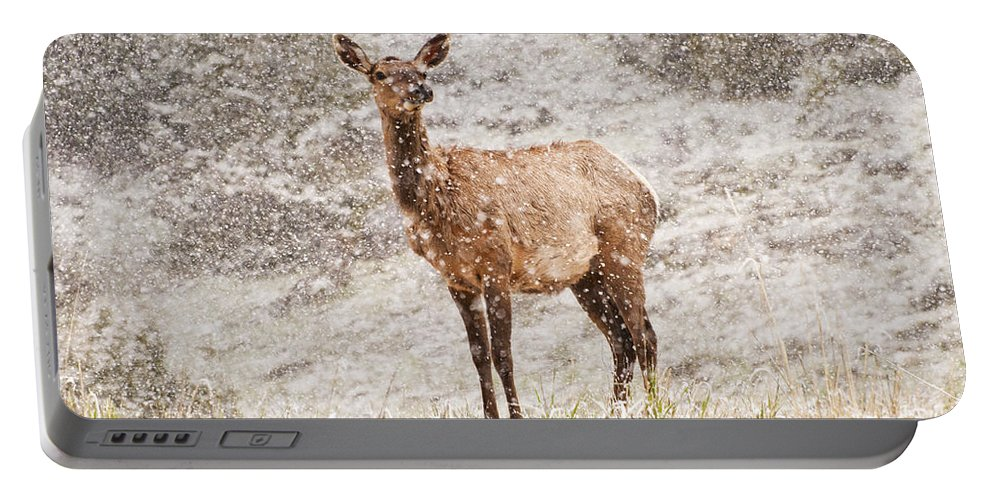 Deer Portable Battery Charger featuring the photograph White Tailed Deer In Snow by Donna Doherty