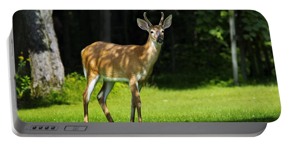 Whitetail Deer Portable Battery Charger featuring the photograph Young Buck by Christina Rollo