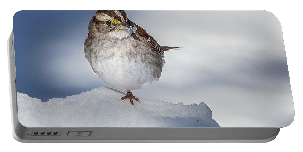 White Thoated Sparrow Portable Battery Charger featuring the photograph White Throated Sparrow Square by Bill Wakeley