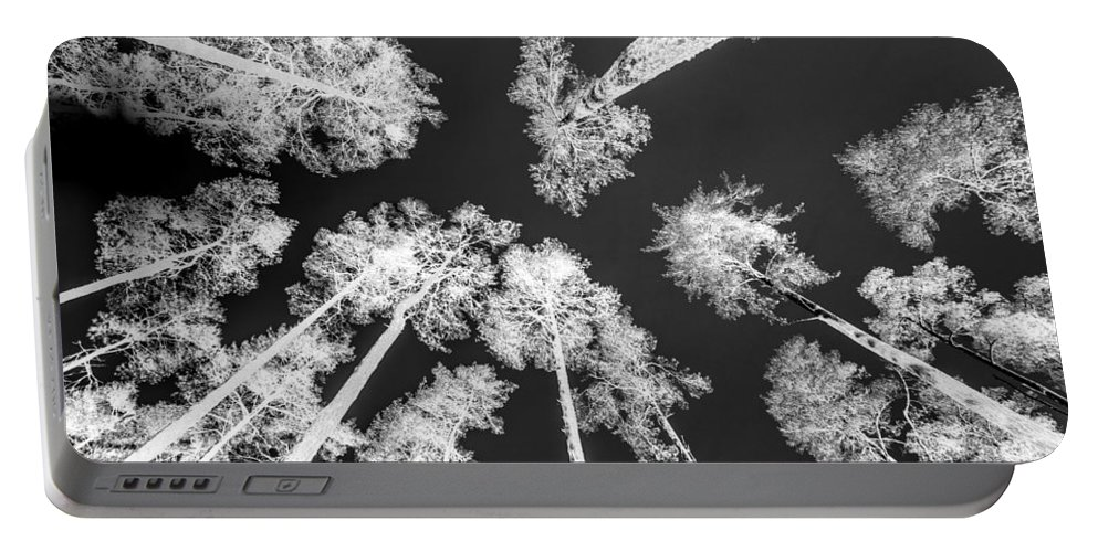 Trees Portable Battery Charger featuring the photograph White Trees by Hakon Soreide