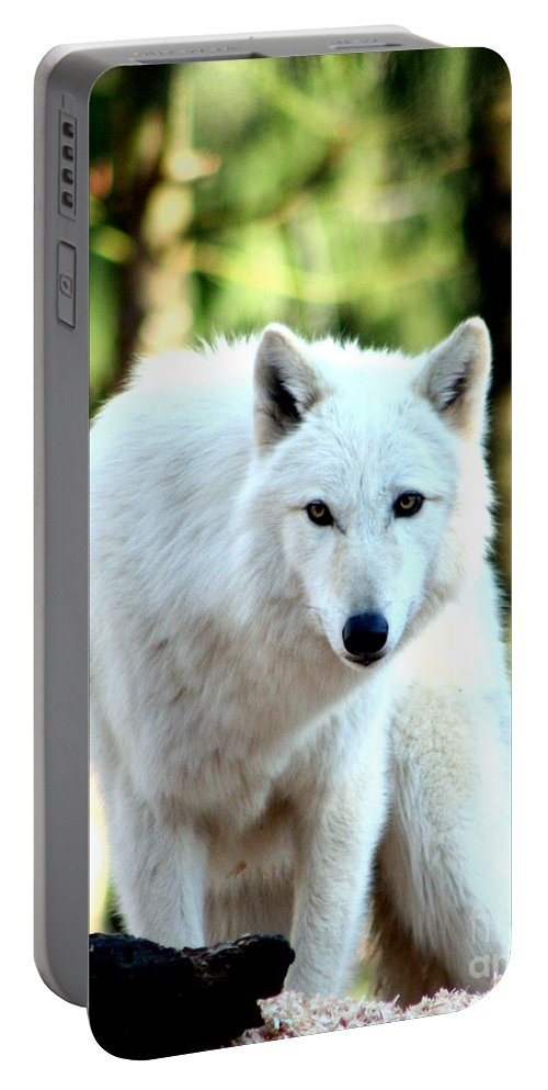 Wolf Portable Battery Charger featuring the photograph White Wolf by Nick Gustafson