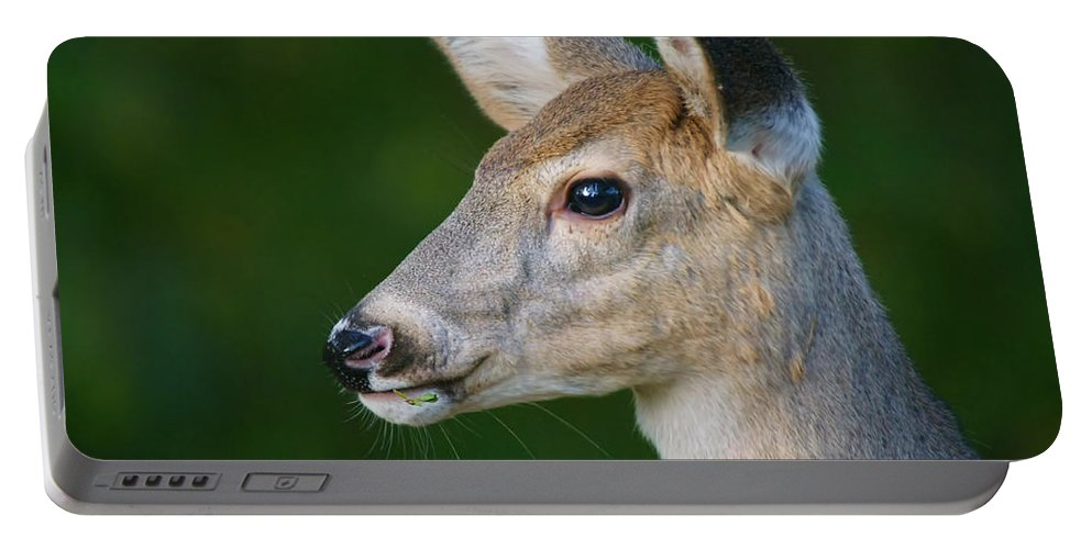 Deer Portable Battery Charger featuring the photograph Whitetail Deer by Alan Hutchins