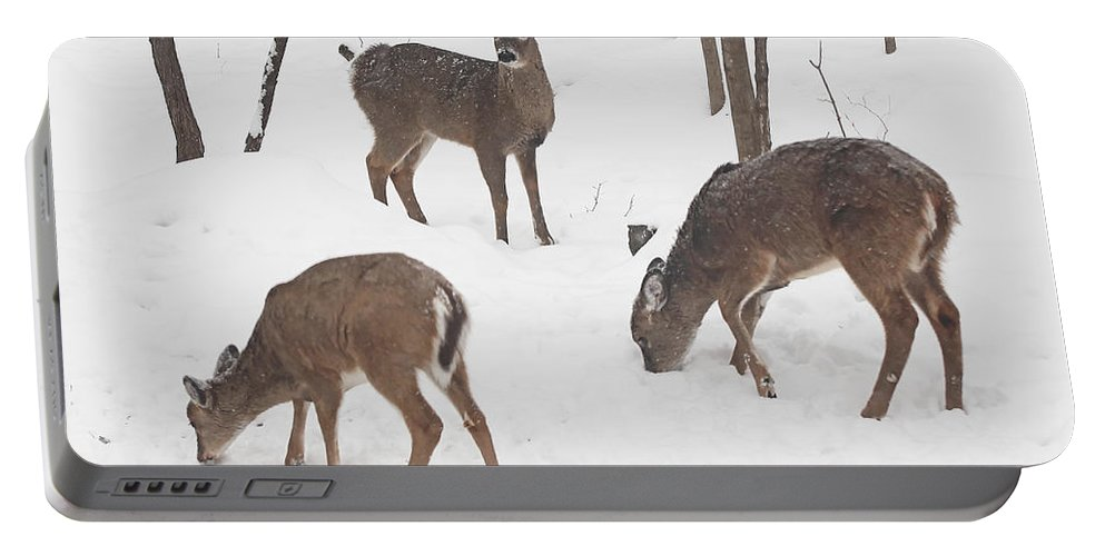 Deer Portable Battery Charger featuring the photograph Whitetail Deer In Snowy Woods by Mother Nature